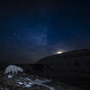 Arcit fox night landscape
