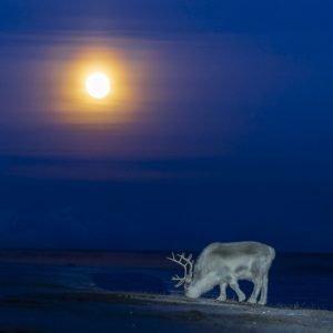 Moonset daytime in November