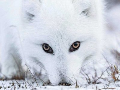 svalbarn-vinter-foto